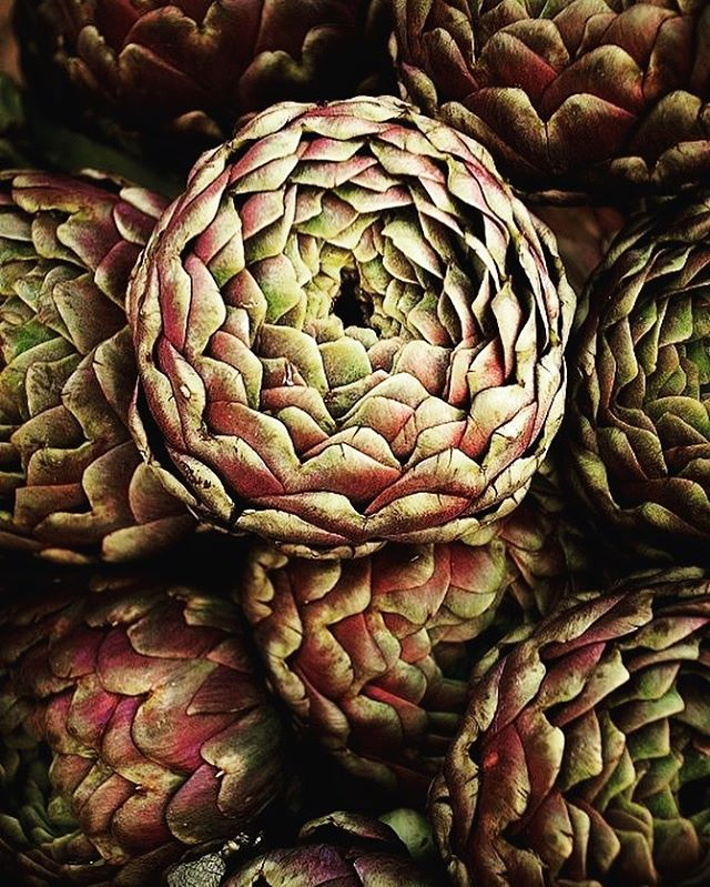 Remind me to tell you about the time I looked into the heart of an artichoke 🖤  #artichoke #vegetables #growyourownfood #growyourown #vegetablegarden #inspiration #permaculture #aspeer