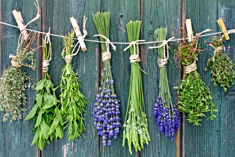 D_herbs_drying_against_fence.jpg