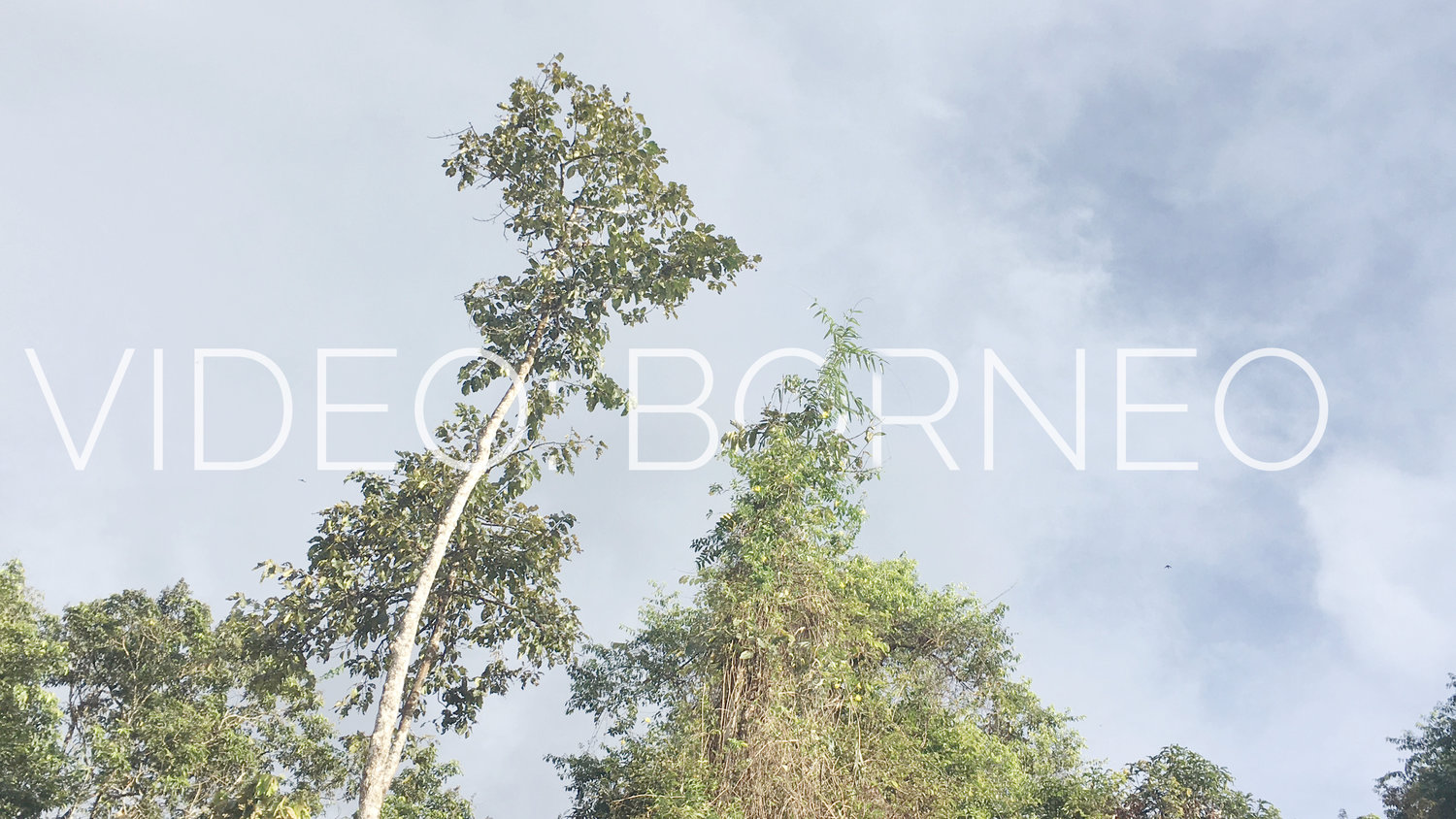 BORNEO RAINFOREST: TRAVEL VIDEO