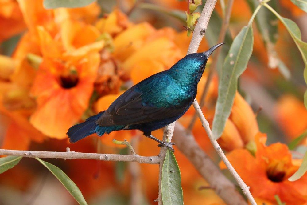 Photography: Rachel Bebb  www.gardengallery.uk.com