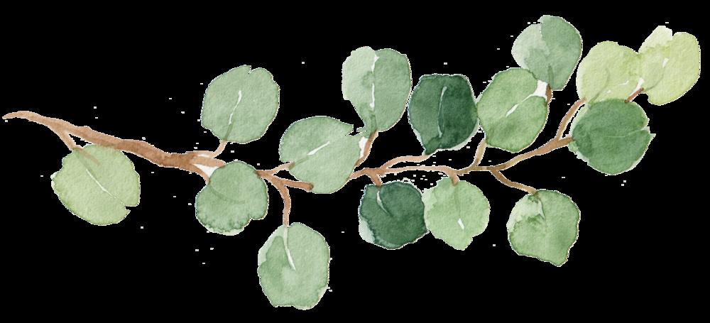 leaf 19.png