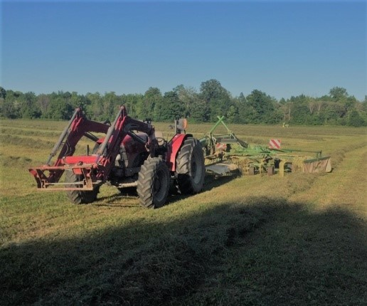 More Hay Raking