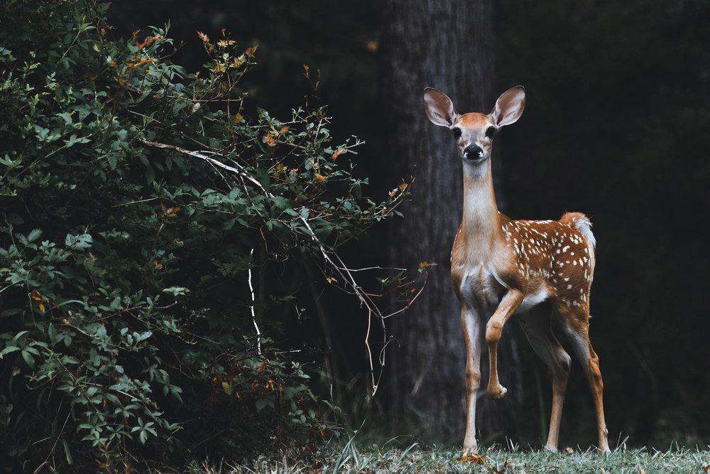 Deer - Tree