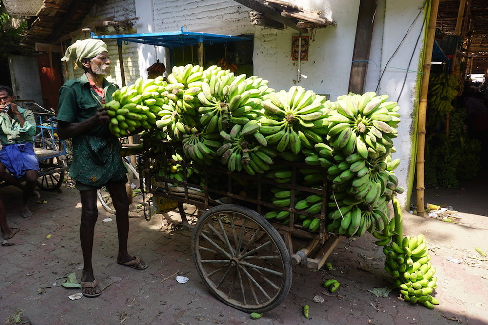 bananas-vegan-health-travel-india