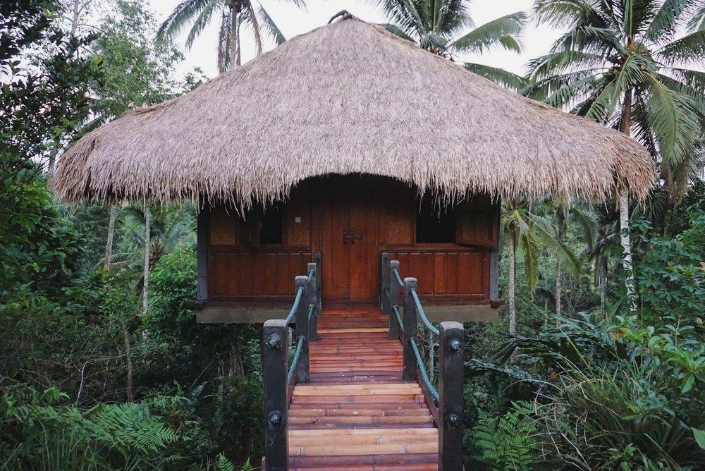bali-travel-jungle