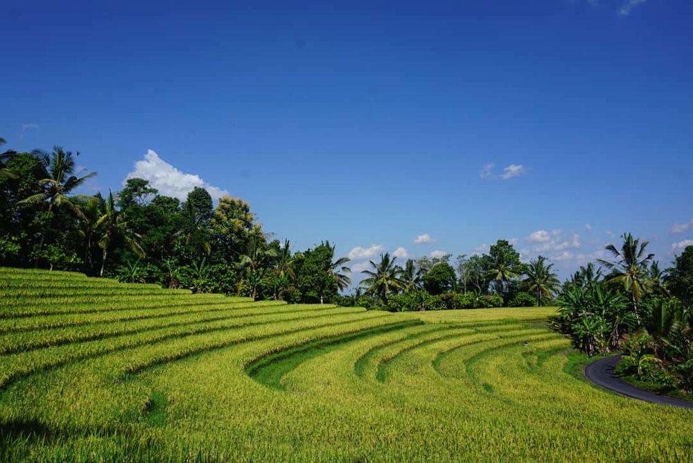 bali-travel-indonesia