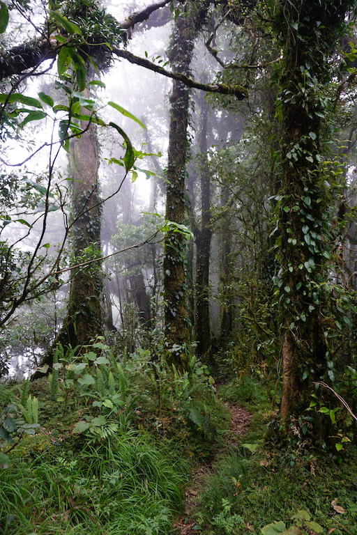 nature-trek-hiking