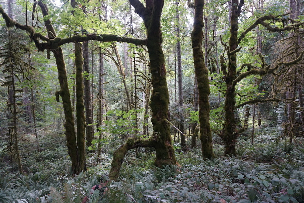 canada-nature-trees