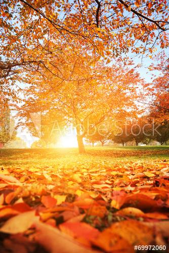 fall-sun.jpg
