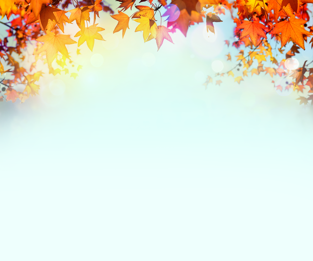 fall-leaves-light-blue-sky.png