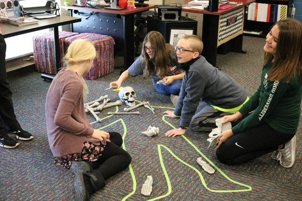 8th graders attempt to put together a skeleton.