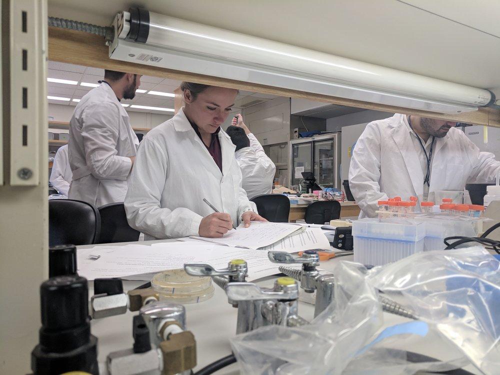cshl-phage-display-17-amelie-schoenenwald