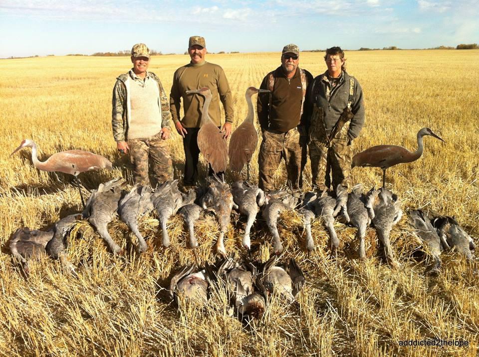 Sand Hill Crane Hunt