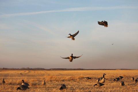 Canada Hunting Trip, Oct., 2011, Mike,Dugan,Doc,Johnnie & Justin 461.JPG