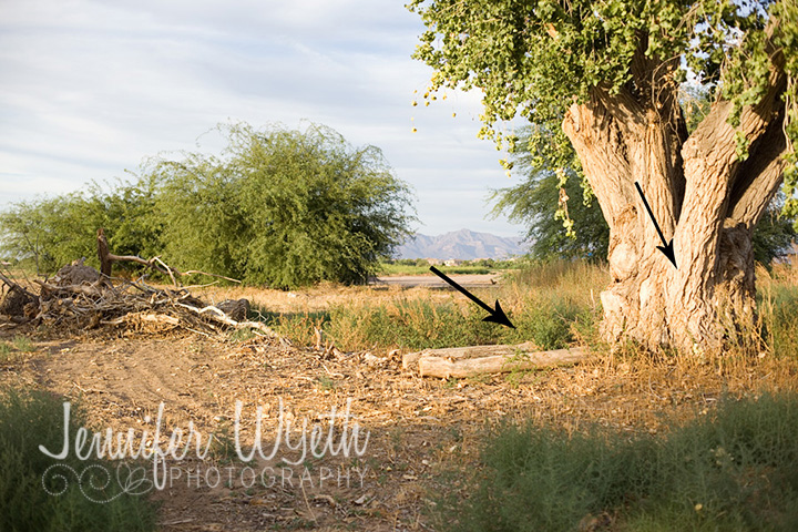textured tree provides beautiful light and location for maternity pictures