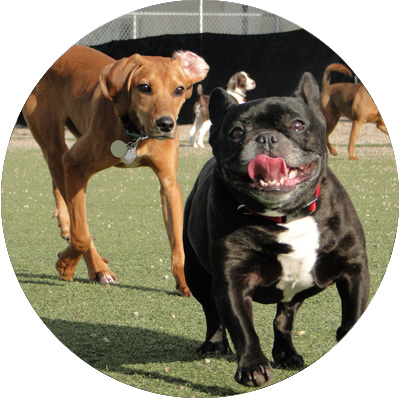 dog daycare minneapolis