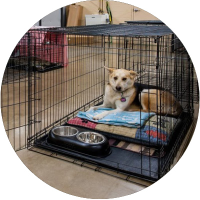 Extra-Large-Boarding-Crate.jpg