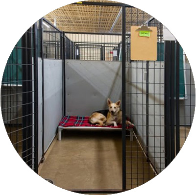 4X8-Dog-Boarding-Suite
