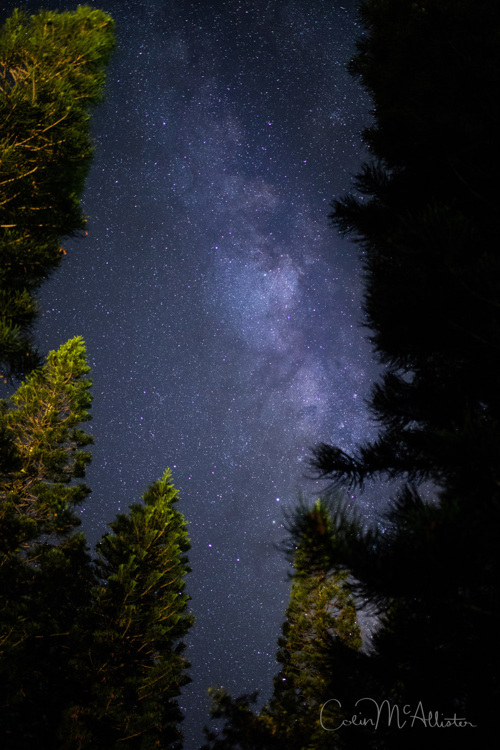 Milky Way Through Trees
