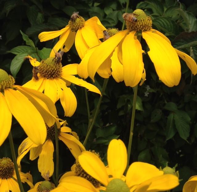lotsofbees.jpg