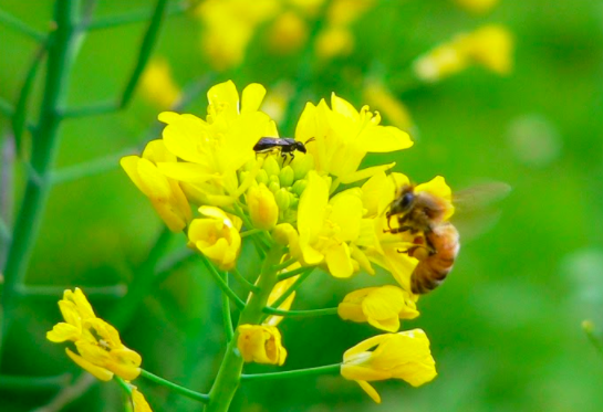 Bees, Pollinators & Insects