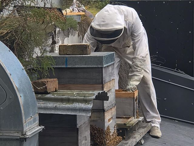 @orphanskitchen have bees on their roof making honey that they share with their customers. They are also their own bee keepers. Big ups to them for keeping it real and using the time between lunch and dinner service today to care for their bees. #urbanbeekeepers #learningtocareforbees #inspirationalpeople #doingthemahi #citysafeforbees #citybeecollaboration