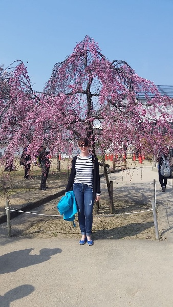 This is Why We Chose Himeji Castle for Cherry Blossom Season - Stunning Style