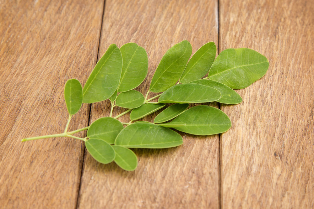 Moringa olifiera leaf, source of My Moringa moringa leaf supplement powder.