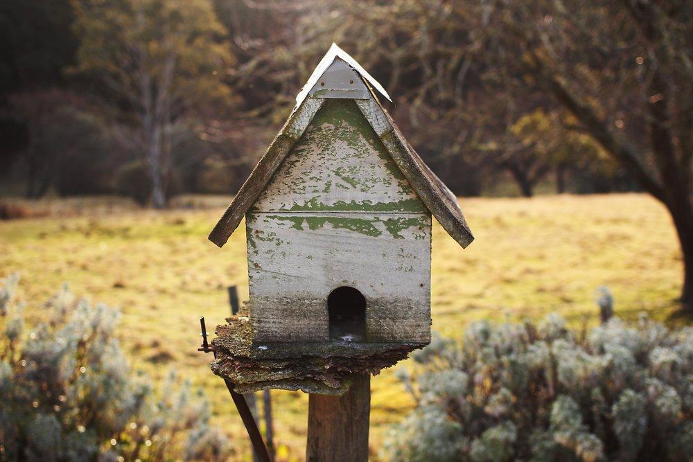 birdhouse-896259.jpg