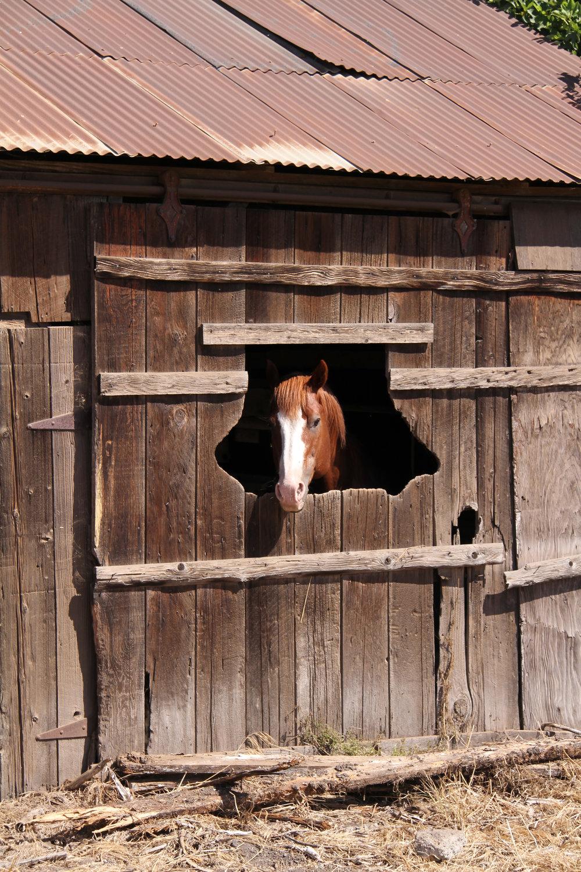 Horse_Comm.jpg