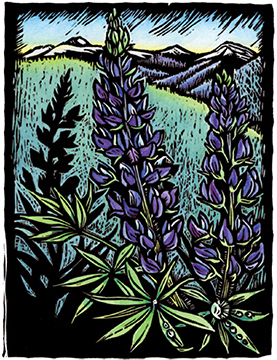 Lupine Coming Home Claire Emery Woodblock Prints