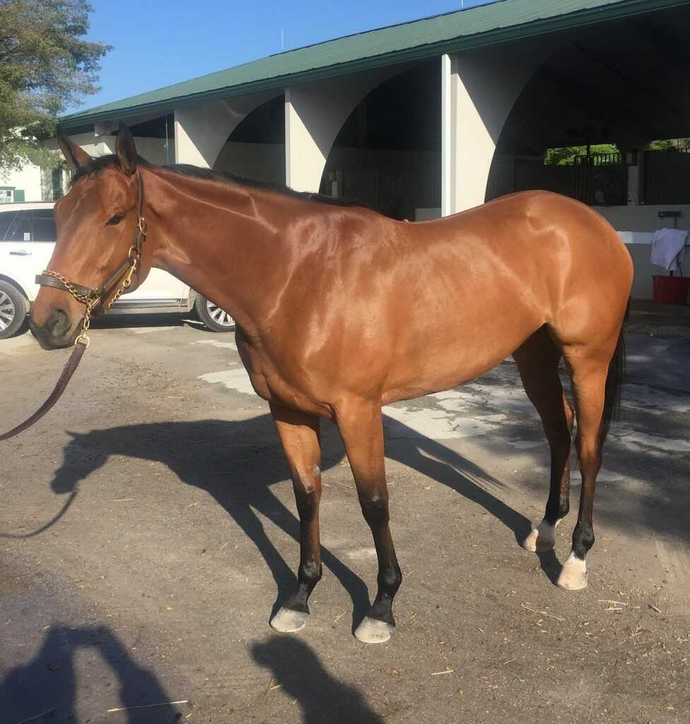 Sophia's Choice (NY) Track: GulfStream Race Agent: Steve Simon ssimon@teamtbsx.com