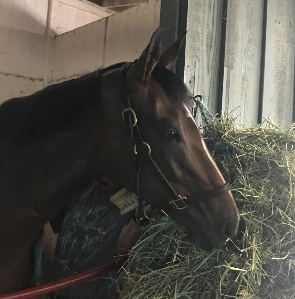 Veronica Bay (CA) Track: Santa Anita (CA) Race Agent: Natalie Kaufmann nkaufmann@teamtbsx.com
