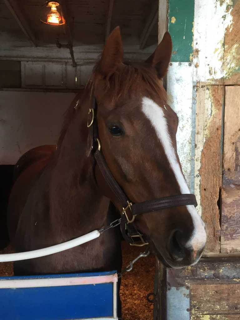 Lady Rullah (NY) Track: Belmont Park Race Agent: Steve Simon ssimon@teamtbsx.com