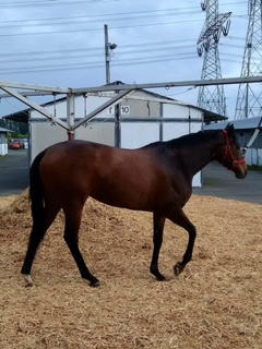 Call Me Cinderella(WA) Track: Emerald Downs Race Agent: Matt Robinson mrobinson@teamtbsx.com