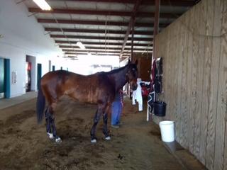 Perfect Meeting (CA) Track: Emerald Downs (WA) Race Agent: Matt Robinson mrobinson@teamtbsx.com