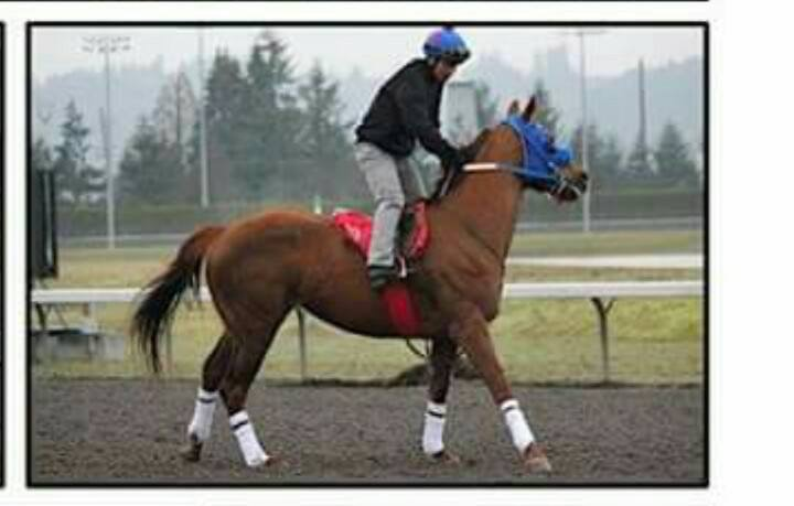 Pet Gold (NY) Track: Emerald Downs Race Agent: Matt Robinson mrobinson@teamtbsx.com