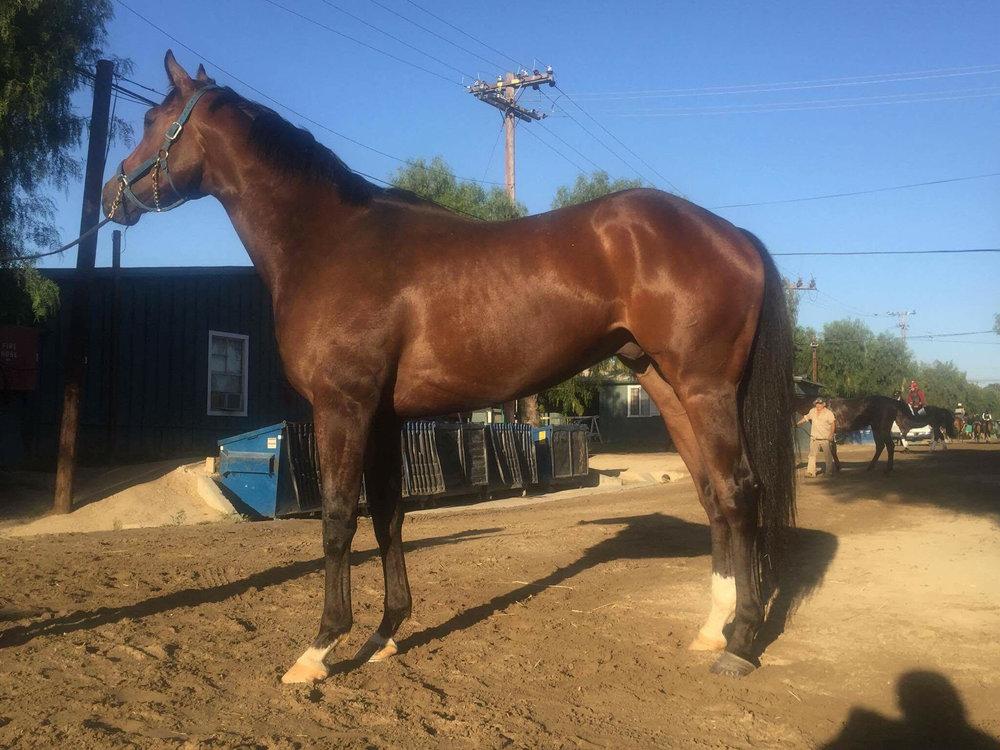 Zarqa Star Track: Santa Anita (CA) Race Agent: Natalie Kaufmann nkaufmann@teamtbsx.com