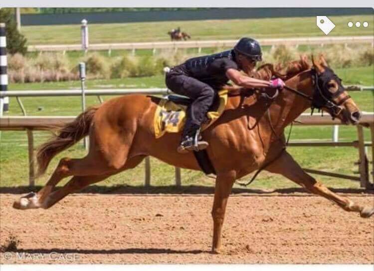 Sergeant Granado Track: Emerald Downs Race Agent: Matt Robinson mrobinson@teamtbsx.com