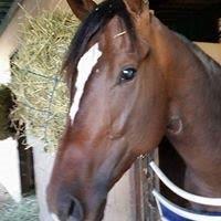 Versante (CA) Track: Santa Anita (CA) Race Agent: Matt Robinson mrobinson@teamtbsx.com