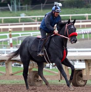 Jerry's Thunder (CA) Track: Santa Anita (CA) Race Agent: Matt Robinson mrobinson@teamtbsx.com