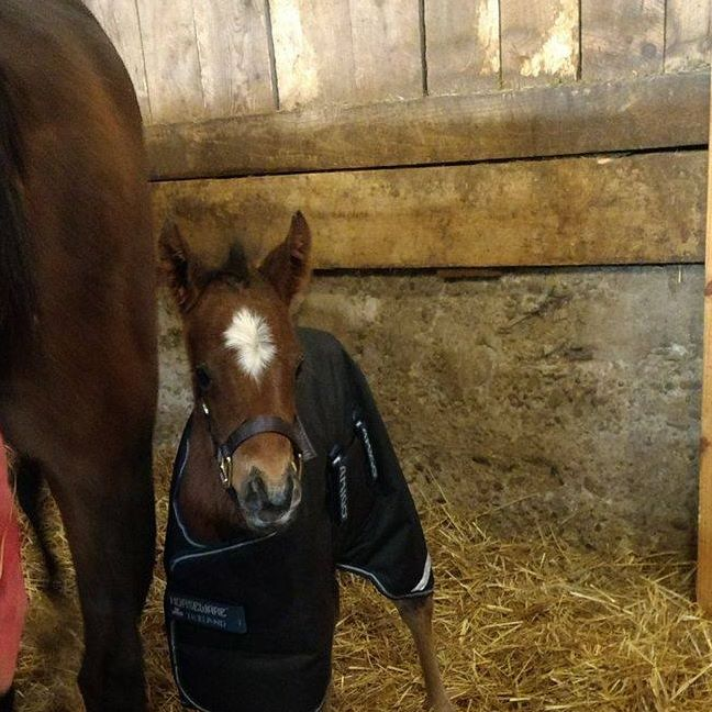 Little Eddie B (PA) Area: Presque Isle Downs (PA) Race Agent: Team TBSX info@teamtbsx.om