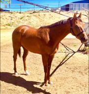 Raider Red (NM) Track: Sunray Park (NM) Race Agent: Matt Robinson mrobinson@teamtbsx.com