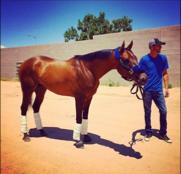 Raider Red (NM) Track: Sunray Park Race Agent: Matt Robinson mrobinson@teamtbsx.com