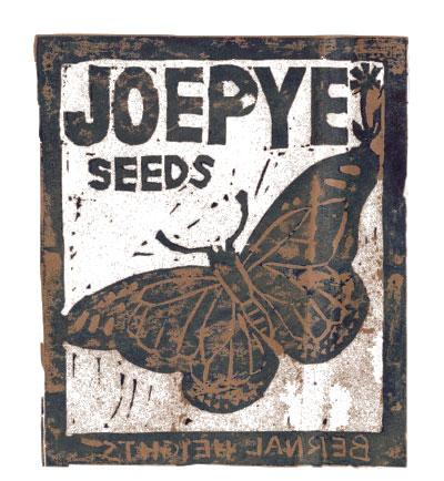 Joe Pye