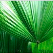 ocho verde.png