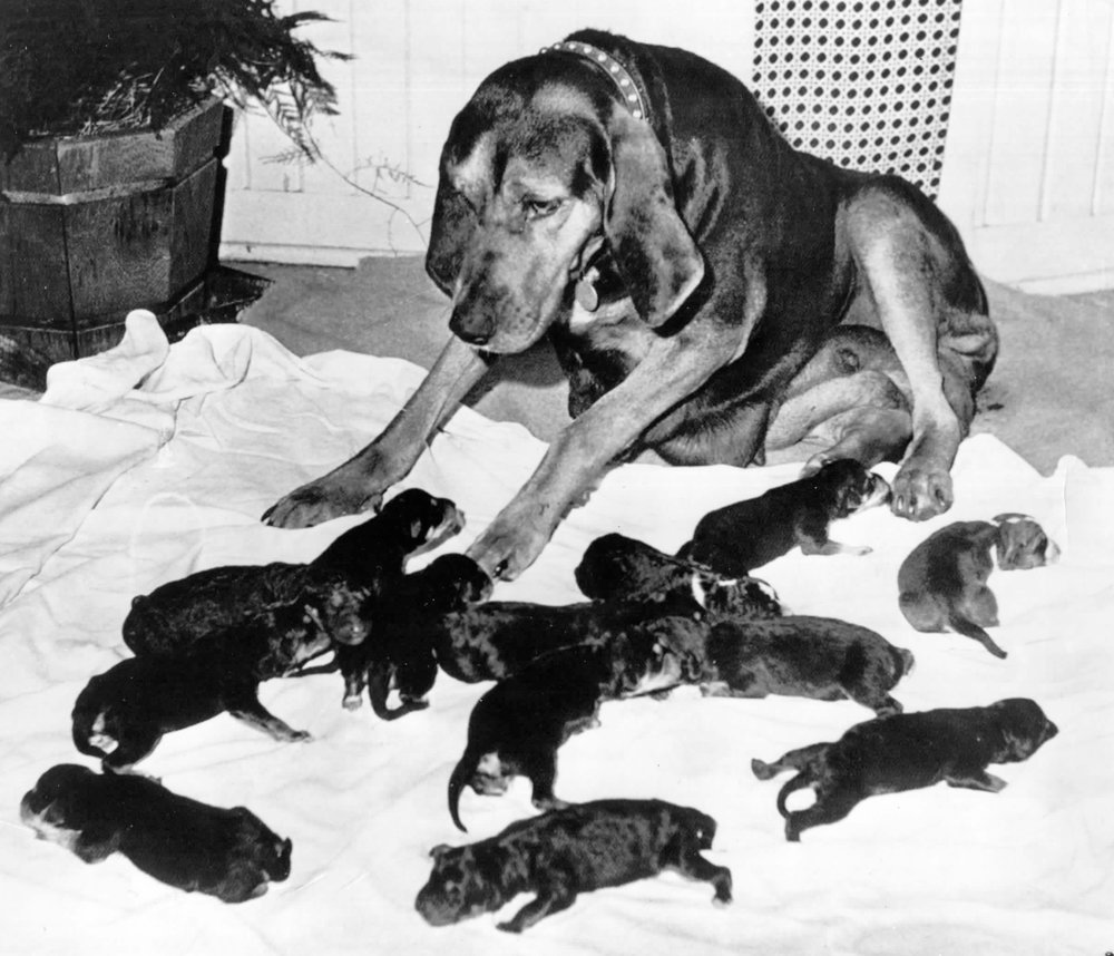 Hound dog and pups photo August 14, 2017101.jpg