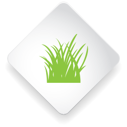 Baja_WebsiteIcons-sf22217-grass.png
