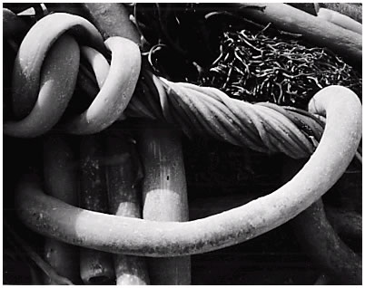 Kelp, Point Lobos , 1930, Edward Weston