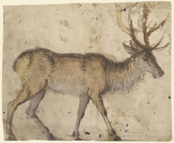 Study of Stag, Lucas Cranach the Elder,, 1520-30  (image courtesy of the J. Paul Getty Museum)